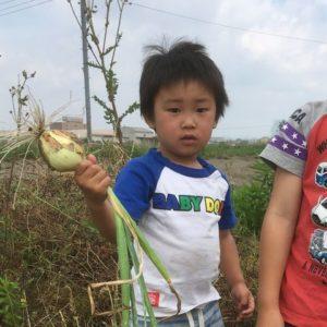玉ねぎを収穫した子ども